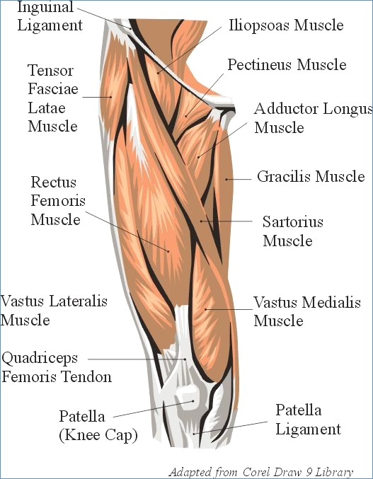 halloween leg muscle tutorial anatomically correct quadricepsi also included that white fascial tissue on the side of your leg called the it band, the white pop of color looked good with all the red